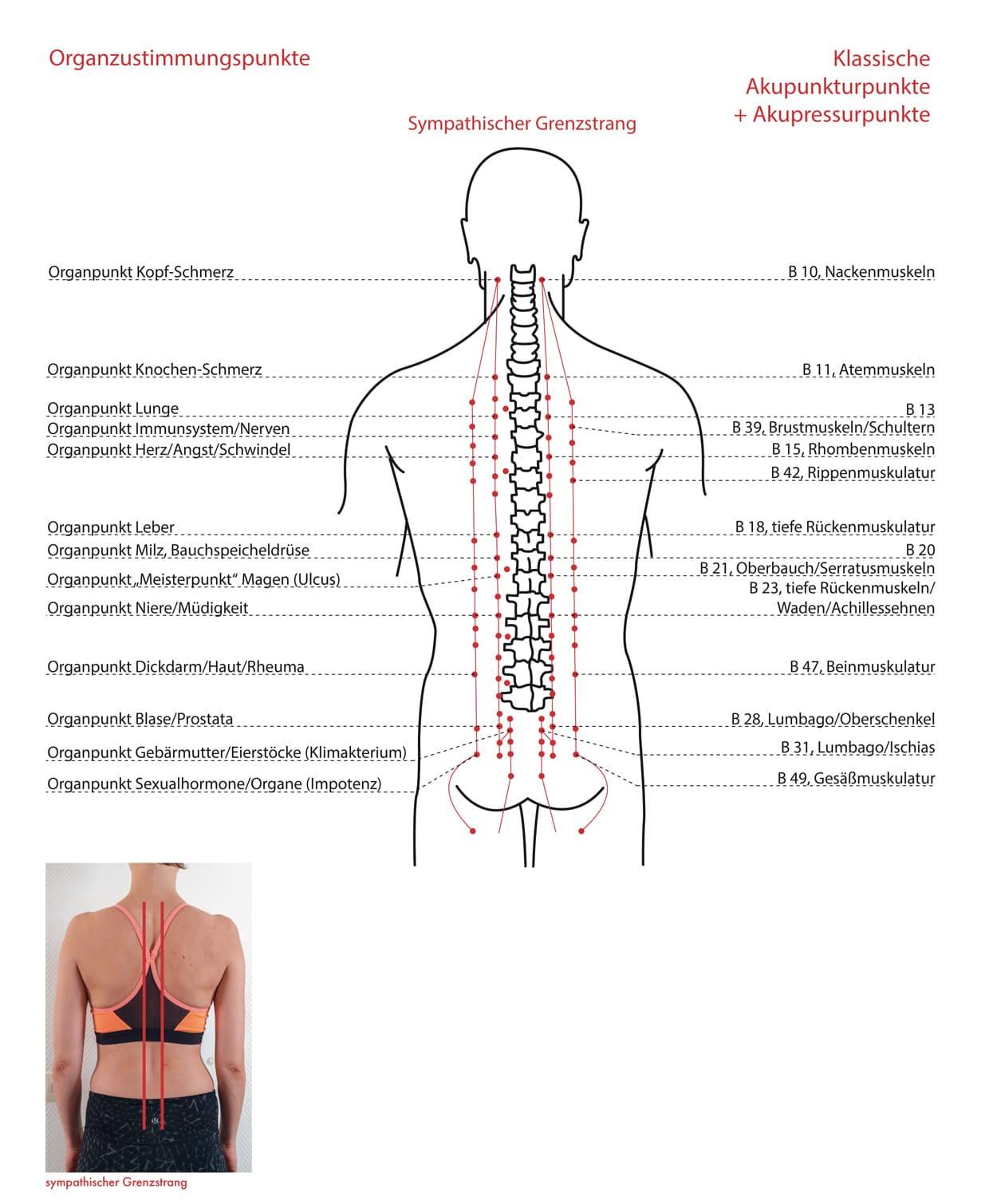 mht-dorso-aktiv-organzustimmungspunkte